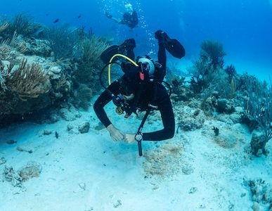 SDI-Diver-Coral-and-Fish-Photo.jpg