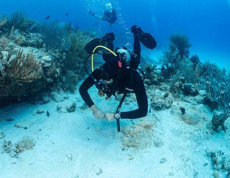 SDI-Diver-Coral-and-Fish-Photo.jpg